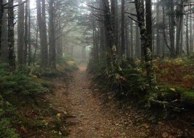 Hiking Mt LeConte